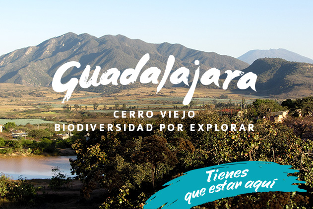 Cerro Viejo, biodiversidad por explorar